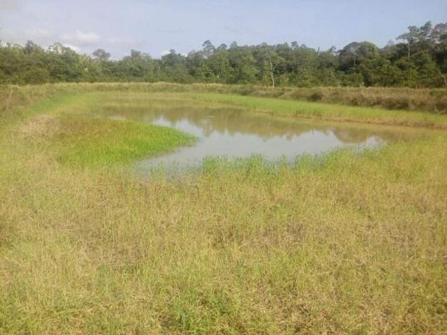 Brasilien 1000 Ha grosses Tiefpreis-Grundstück südwestlich von Manaus AM