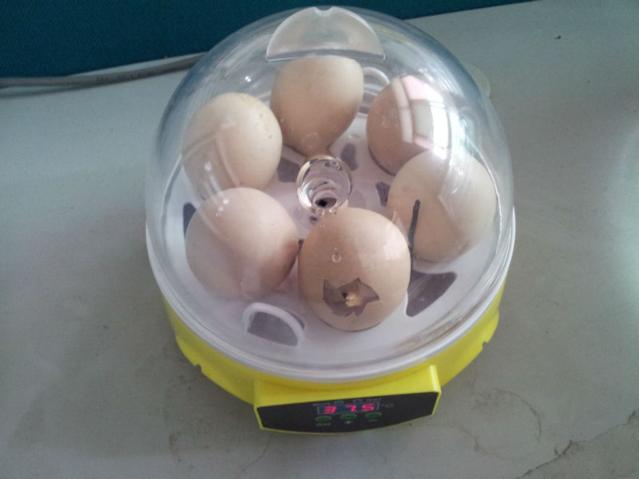 Eier Inkubator Brutkasten Brutapparat Ei Brutmaschine