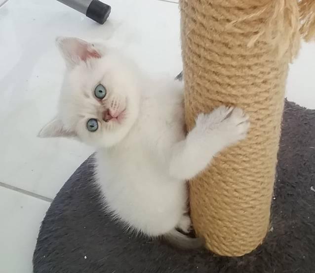 Junge Katzen zum verkaufen