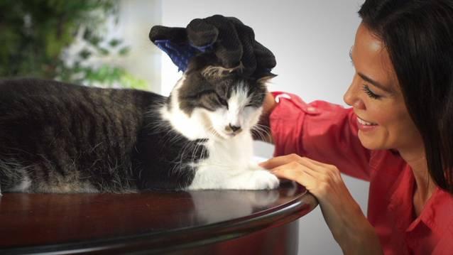 Katzen Katze Hunde Tierhaar Handschuh Die Silikon-Oberfläche zieht Haare, Schmutz & Ablagerungen