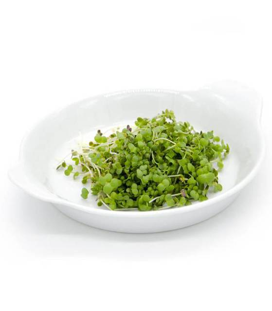 Microsprossen - Microgreens - Lokal Produziert