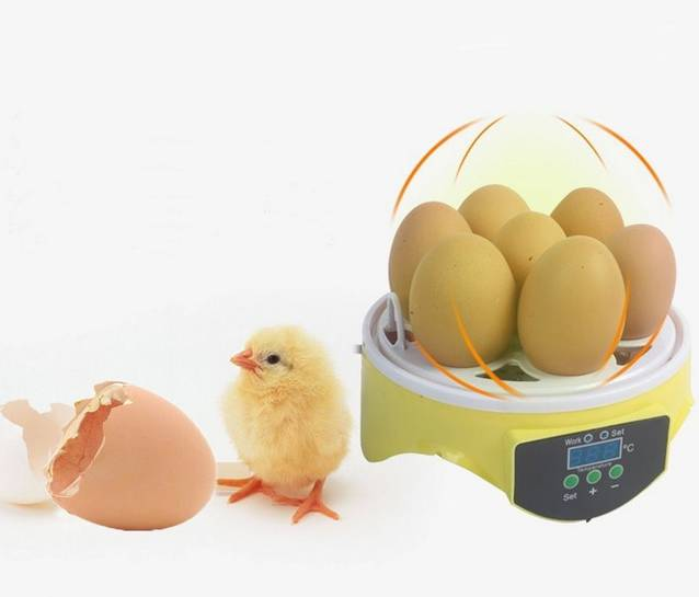 Mini Ei Brutkasten Inkubator Brutautomat Brutmaschine Brutapparat Brutmaschine 7 Eier