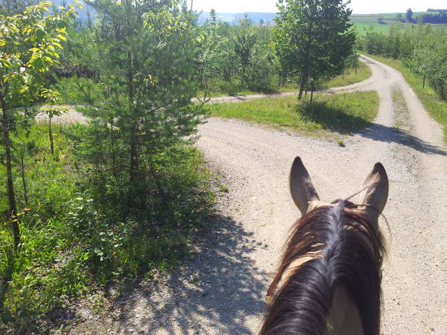 Morning Ride or Sundowner Ride nach klein Canada