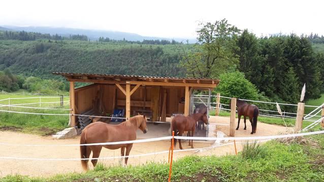 Platz in Offenstall/Freilaufstall Pferde