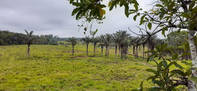 Brasilien riesengrosses 1'000 Ha Tiefpreis - Grundstück mit Rohstoffen