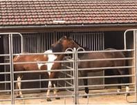 Pferdeboxen in Lamboing Berner Jura zu vermieten