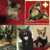 Selbständigkeit für Tierfreunde / Plan B