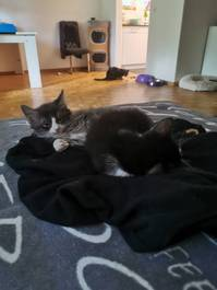Süsse Kitten suchen Lebensplatz